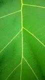 Texture verte de feuille dans la verticale Image libre de droits