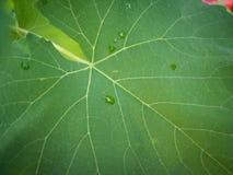 Texture verte de feuille de tache floue pour le fond indiquant l'amour pour la mère nature et la pollution gratuite photos stock