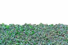 Texture verte de fleur de boutons de manteau d'isolement Photo stock