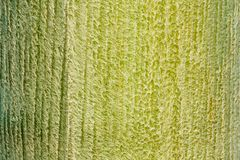 Texture verte de fond de ride de peau d'arbre photos libres de droits