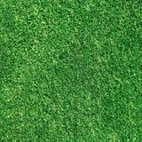 Texture verte de gras Images libres de droits