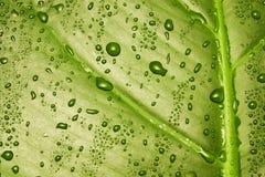 Texture verte de lame Images stock