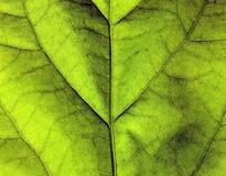 Texture verte de lame Photographie stock libre de droits