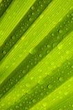 Texture verte de lame Photo stock