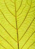 Texture verte de lame Photographie stock