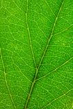 Texture verte de lame Photos stock