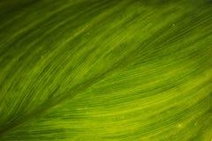 Texture verte de lame Photo libre de droits