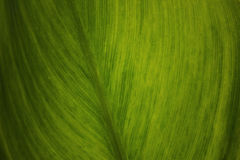 Texture verte de lame Photos libres de droits