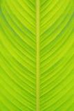 Texture verte de lame Image libre de droits