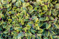 Texture verte de lame Fond de texture de feuille Photos libres de droits