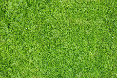 Texture verte de lames Photos stock