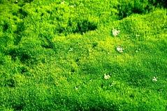 Texture verte de mousse Photos stock