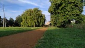 Texture verte vivante de parc de matin clips vidéos