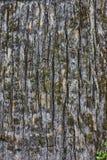 Texture verticale d'écorce de pin photos libres de droits