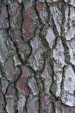 Texture verticale de Brown d'écorce de pin avec le modèle intéressant Photos stock