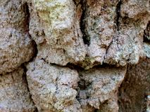 The texture of very old birch bark stock images