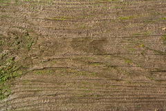 Texture of very old wooden surface Royalty Free Stock Images