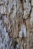 Texture vraie et de nature en bois Image libre de droits