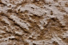 Texture of the wall. Royalty Free Stock Images