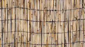 Texture of wall of bamboo Stock Photo