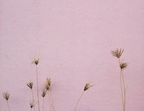 Texture of wall and dry flowers. Stock Photo
