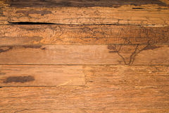 Texture wall wood termites Royalty Free Stock Photo