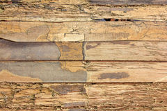 Texture wall wood termites Stock Image