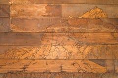 Texture wall wood termites Royalty Free Stock Photos