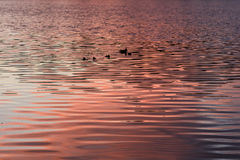 Texture water sunset background royalty free stock photography