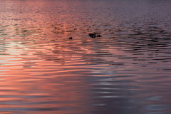 Texture water sunset background royalty free stock photo