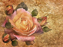 Roses vintage background Stock Photos