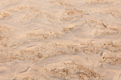 Texture of wet sand Stock Images