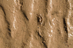 Texture of wet sea sand Stock Images