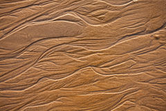 The texture of wet sea sand Stock Image