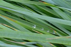 The texture of the wet tall grass. Stock Photos