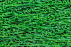 The texture of the wet tall grass. Stock Photography