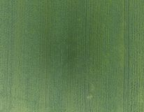 Texture of wheat field. Background of young green wheat on the f stock photos