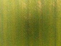 Texture of wheat field. Background of young green wheat on the field. Photo from the quadrocopter. Aerial photo of the wheat field.  Royalty Free Stock Photo