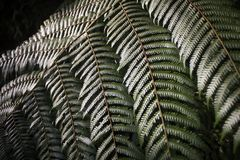 The texture of wild fern leaves royalty free stock image
