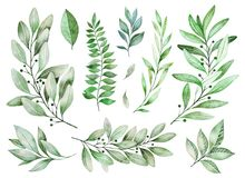 Free Texture With Greens,branch, Leaves, Fern Leaves, Foliage Stock Photography - 116519872
