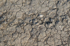 Texture of withered earth Royalty Free Stock Photos
