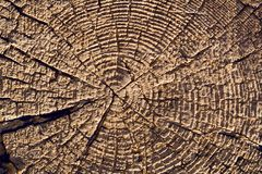 Texture of wood. Face a cut tree, smeared with clay royalty free stock photography