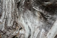 Texture wood Stock Photos