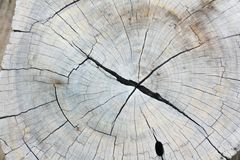 Texture of wood Royalty Free Stock Image