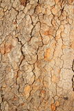 Texture wood. Is the art from nature royalty free stock photography