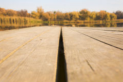 Texture of wood background closeup Stock Image