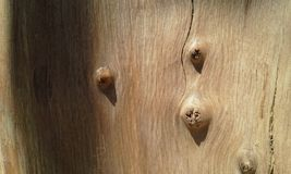 Texture of wood background. Texture of wood curves stock image
