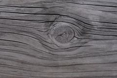 Texture of wood background stock photography