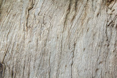 Texture of wood&bark Royalty Free Stock Photos