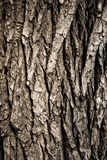 Texture of  wood bark close up Stock Photos